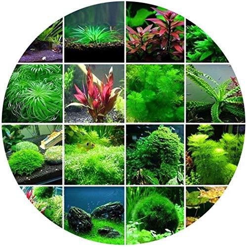 Goodfans 300 Pcs/Set Aquatic Water Seeds Aquarium Planting Seeds Fish Tank  Deaoration Grass Seeds Flowers